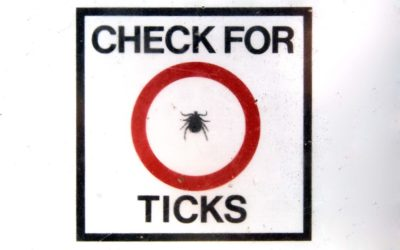 treatment of Lyme Disease