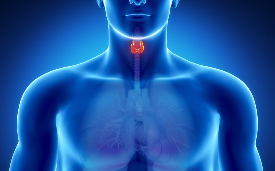 How can the immune system affect the causes of Hashimoto's Disease or Hashimoto's Thyroiditis?