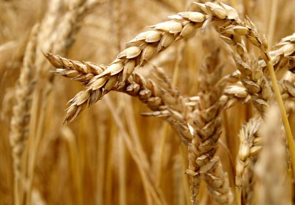 The Secret of Grains: What You Need to Know About Healthy Grains