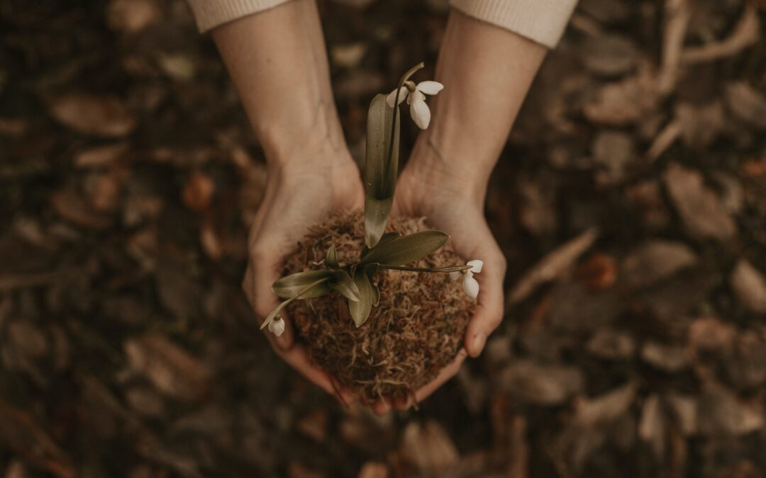 Autumn Medicinal Plants and Wild Herbs to Pick and Use This Fall